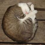 Fetus Position