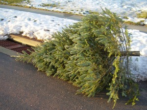 discarded Christmas tree